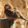 野鳥の名前を調べるのに便利なオススメの無料Webサイト