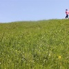ランニングログ 心拍トレーニング13週目 7-2日目 元・心房細動ランナーとお方さま、ポンコツ夫婦のフルマラソンチャレンジ日記