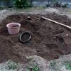 庭の畑を整えました(玉ねぎの苗を植え付けました)