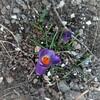 春のきざし…忙しい年度末だけど