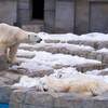 円山動物園で動物相手にOMD E-M5の実力を試してきた