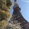 4月4日(木) 桜と東京タワー。