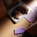 台風と天ぷらと心臓病