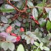 植栽工事⑤ シンボルツリー