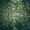 【ひたちなか海浜鉄道】北アイルランドのような酒列磯前神社の樹叢