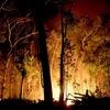 ブラジルのアマゾン熱帯雨林の火災について思うこと。