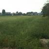 学外畑の草刈りとひまわりの成長の様子