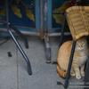 【レビュー】SIGMA 135 mm F1.8 DG HSM | Artが野良猫撮影で最強レンズ【作例8枚】