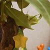デスティニーアイランドっぽい観葉植物