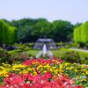 昭和の日で無料開放の昭和記念公園へ行ってきた【2018.4.30】