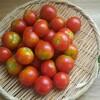 トマトの出汁浸し