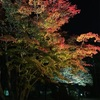 【香雪園(見晴公園内)】〜はこだてMOMI-G(もみじ)フェスタ〜の夜間ライトアップされた紅葉を観賞♪