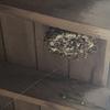 浜松市で軒下にできたアシナガバチの巣を駆除してきました!