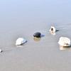 ウインターサーフ物語。「春一番と呼ぶには、その荒々しさはいまひとつ。とは言え、強風。巻き風にあおられて砂浜に打ち上げられた貝殻も眠りから覚める頃合いの春候」の巻。