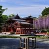 【藤・新緑】藤が見頃の平等院へ【4/22散策記】