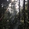 Today's Luke - ラブラドール ルーク 山散歩