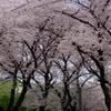 2017年4月10日(月)吉見 桜堤公園 大芦橋 周回 100kmライド Part 1/2 往路編