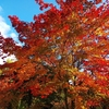 【観光部】<札幌市>中島公園・札幌護国神社にてプチ紅葉狩りをしてきました