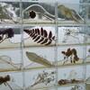 祭りの休憩室−新津庭(秋葉区・新津美術館)−水と土の芸術祭2009
