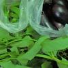 Kさんの野菜ー3