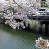 またまた・・・桜満開の彦根城へ