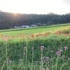 彼岸花のお散歩コースと草刈り頑張った!