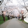 【日本一】弘前城のさくら祭りに行ってきた