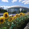 真夏の東京ドームシティ「ひまわりミストと未来のミライ展」