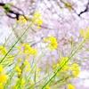 【228日目実績】春休み開始