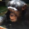 旭山動物園の素晴らしさを写真と共に語る