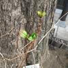 『春は動いてます。』