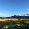 稲刈りの日々とイナゴと秋刀魚の歌