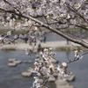 アニメ『けいおん!!』雑感(30)紅葉と桜 京都再訪(3)巡礼ついでに観光も楽しもう。