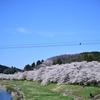 姓名鑑定における「桜」について