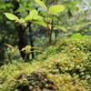 【九州】ぼくのゴールデンウィーク2017~九州本土と屋久島を満喫する8泊9日の旅~⑥【屋久島上陸編】