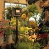 6月のポンプ小屋は従来の生花とカフェスタイルです!