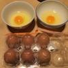 塩不足を一気に解消する「卵醤」でエナジーチャージ!