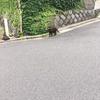 島猫、愛でて撮って(元町地区のネコたち その②)