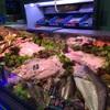 スケベ人間がスケベニンゲンに魚を買いに行く。