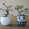 【推進室訪問&レポート】ドキドキの盆栽植え替えデー