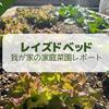 【2021年7月】レイズドベッドによる家庭菜園レポート