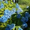 都会の庭、椿山荘で散歩