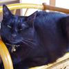 今日の黒猫モモ&白黒猫ナナの動画ー798