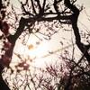 【写真】最近の写真撮影(2017/2/18)万博記念公園その1
