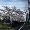 京都の穴場お花見スポット 地元民におすすめ。