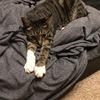 猫にとっても心地良いベッド・・・