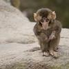 【高崎山動物園】おサルさんたちの恋のシーズン〈別府〉