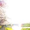 小さな旅 第44回~美しきさくらの花~