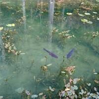 12月・冬のモネの池
