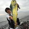 速報速報!!夏のあの魚が沼津にやってきました!!